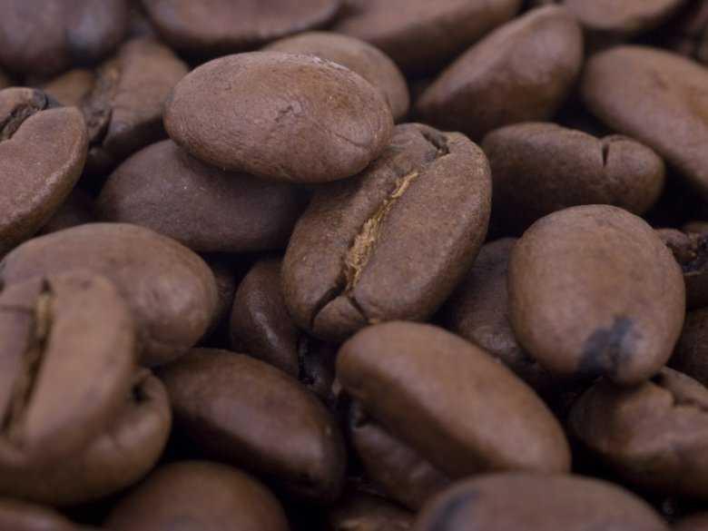 Ziarno kakaowca - indiański symbol życia i płodności