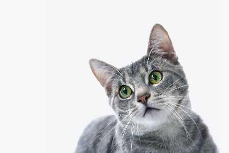 Choroba kociego pazura - nasz pupil może być groźny
