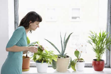 Powszechnie stosowany pestycyd może powodować obniżenie płodności u kobiet.