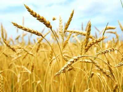 Ochrona ubezpieczeniowa rolników