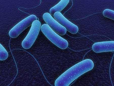 Niska skuteczność leczenia wyprysku bakteriami probiotycznymi