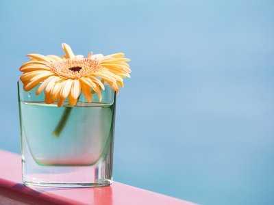 Co zrobić z kwiatami domowymi podczas urlopu?