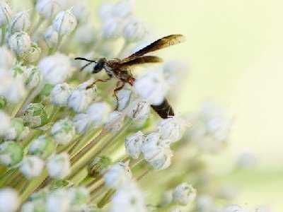 Lato okresem częstszych użądleń owadów