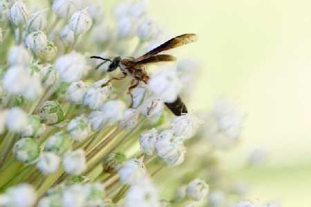 Użądlenia  i ugryzienia owadów - jak sobie z nimi radzić?