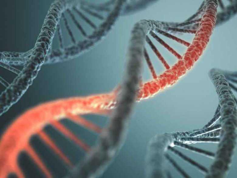 Kod DNA, genetyka