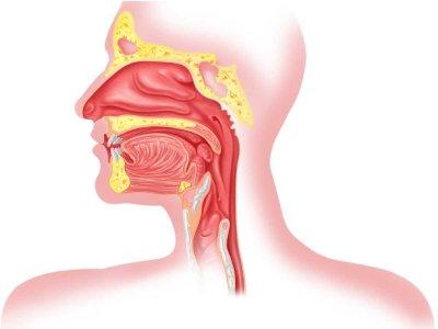 Zespół alergii jamy ustnej – wszystko, co warto o nim wiedzieć
