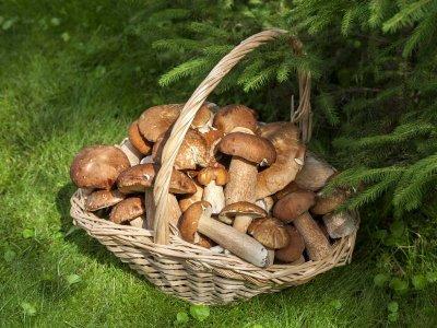 Zatrucia grzybami – co zrobić, jeśli podejrzewasz zatrucie?