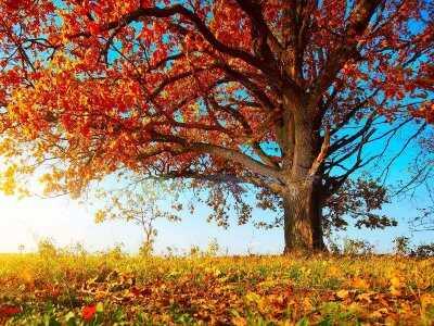 Zadbaj o odporność na jesień