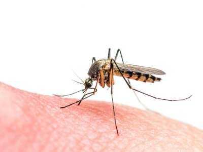 Dlaczego po ukąszeniu komara pojawiają się świąd, obrzęk i zaczerwienienie skóry?