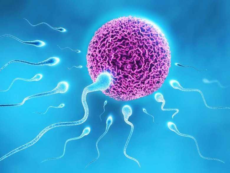 Zapłodnienie komórki jajowej przez plemnik