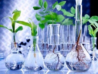 Rośliny pomagają w gojeniu ran skóry