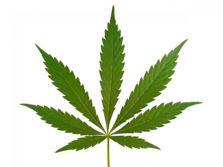 """Kannabinoidy (""""medyczna marihuana"""") w terapii chorób – stan obecny i perspektywa, cz. 3"""