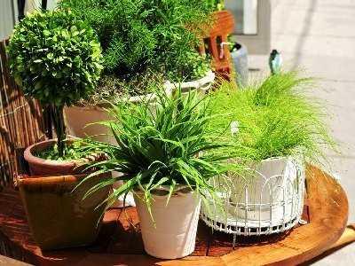 Rośliny stosowane w leczeniu chorób dermatologicznych