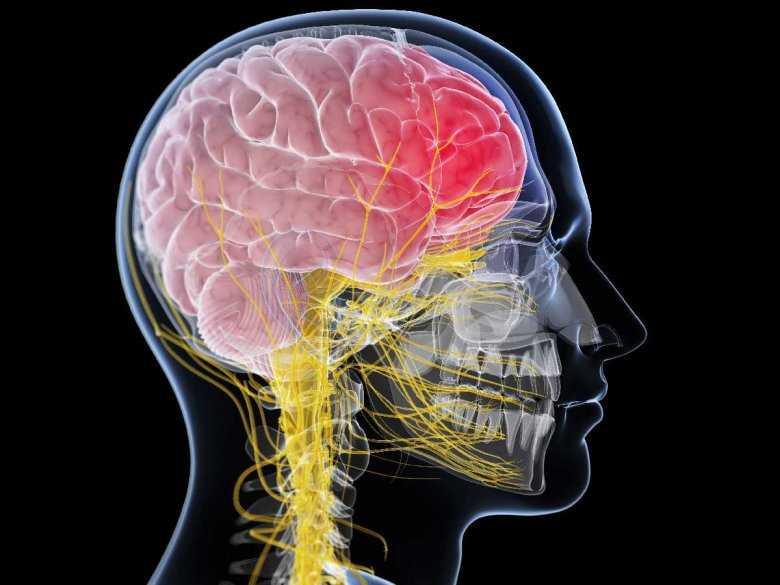 Funkcjonowanie mózgu