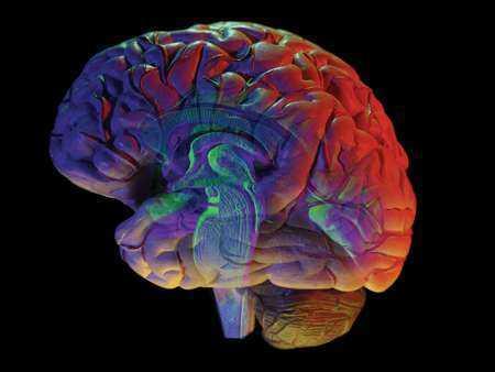 Korelaty istoty szarej i poziomów przewodności skóry u schizofreników i zdrowych ochotników