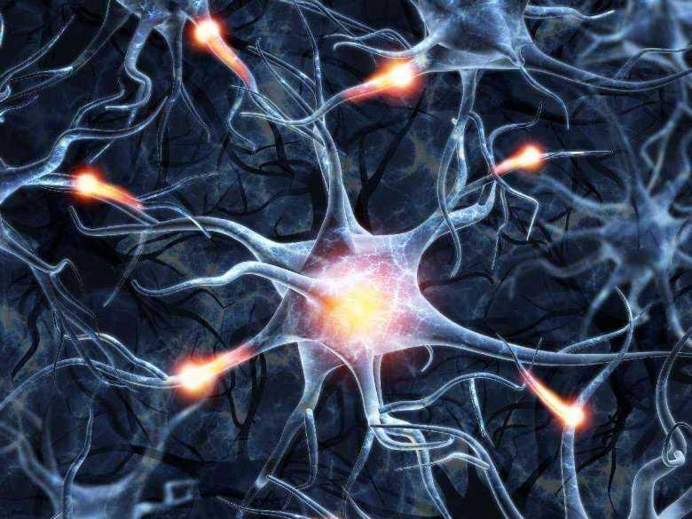 Rola BDNF i GABA w neuroregeneracji