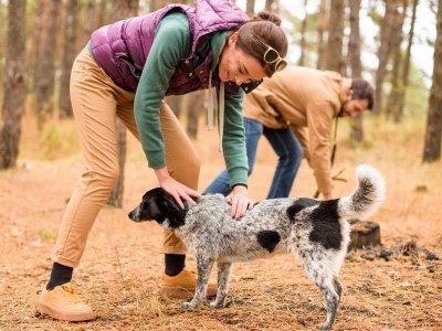 Czy psy za pomocą węchu potrafią wykryć malarię?