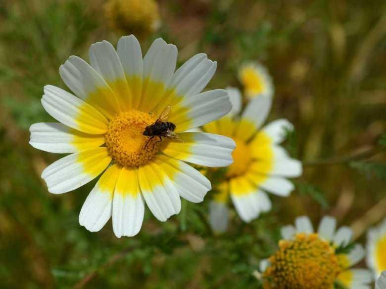 Rola pszczół w przyrodzie