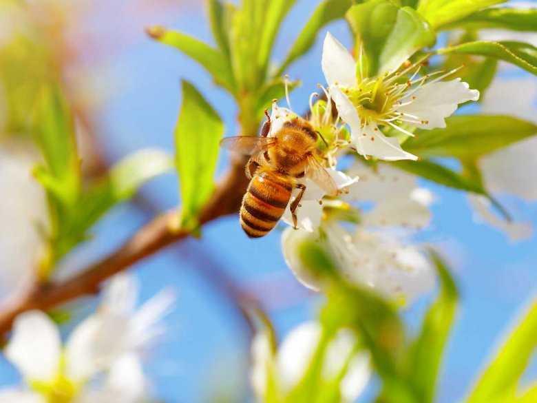 Jak reagować na ukąszenia owadów?