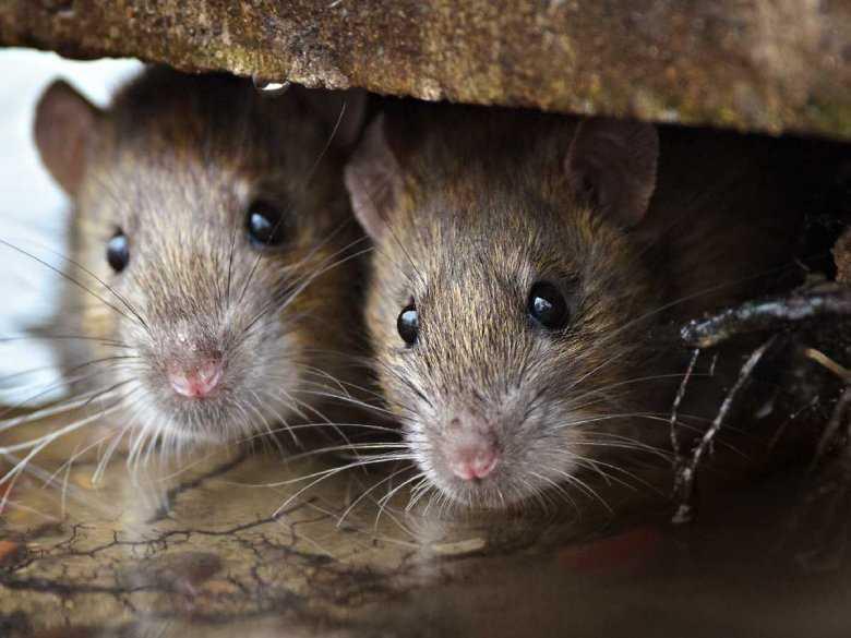 Wpływ wdychania rozpuszczalnika na strukturę mózgu i zachowanie zwierząt