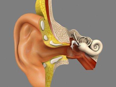 Niedobór żelaza i związana z nim anemia mogą prowadzić do... zaburzeń słuchu?