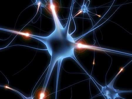 Neuron, układ nerwowy