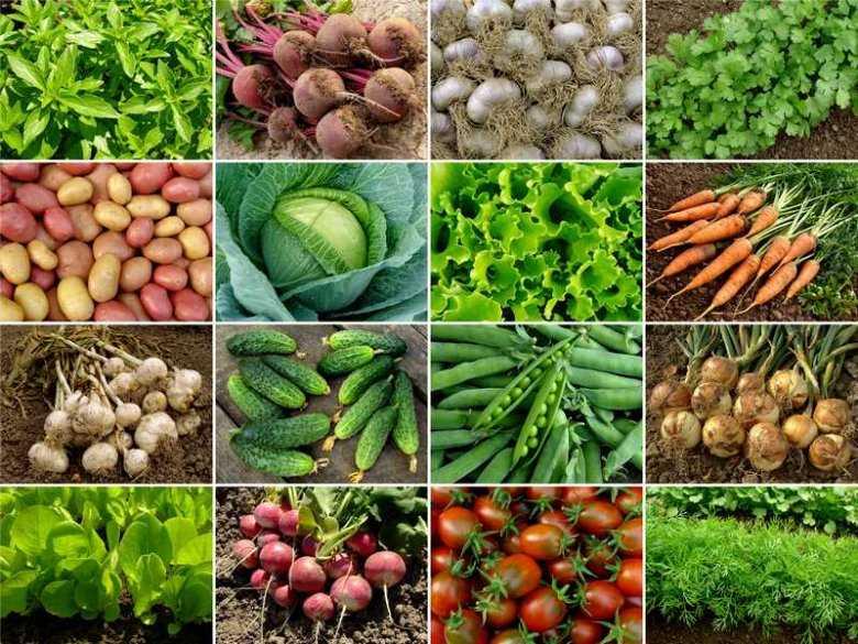 Karotenoidy istotne w prewencji chorób nowotworowych