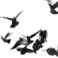 Ptasiu