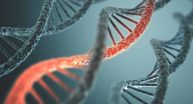 Mutacja genetyczna skutkująca chorobą Pelizaeusa-Merzbacher